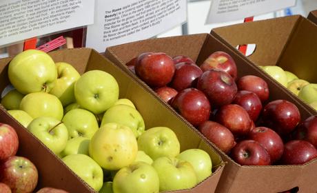 Apples3Closeup_orig
