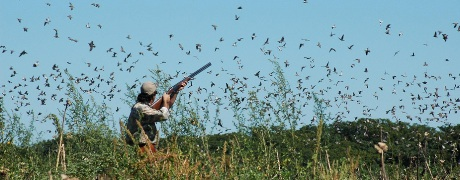 dove-shooting-RS